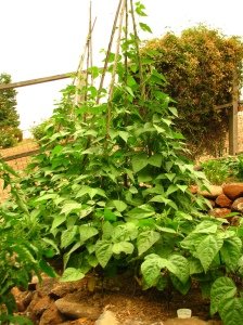 Planning Out Your Eye Catching Vegetable Garden, what should I plant in my garden,  what is the best vegetable to grow in my home garden,