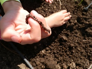 Improving your soil, adding nutrients to your soil