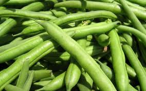 Gardening Mistakes, how do you properly grow pole beans, do pole beans need fertilizer, how often do they need to be watered
