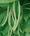 How To Grow Beautiful Bush Beans, how to grow beans, what should I grow in my garden, are beans easy to grow, are peas easy to grow, how do I grow beans,