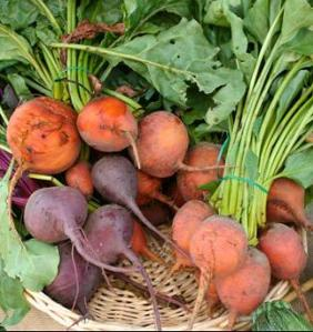 Beet, growing beets, home grown beets, organic beets,