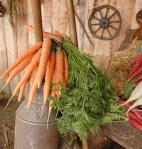 Old canister with carrots on the farm carriage, what is the best way to grow carrots,  how close can you plant carrots, where is the best place to plant carrots, when do you harvest carrots, how do you harvest carrots, how do I store carrots, what is the spacing for planting carrots, how long do carrots take to grow, how do you freeze carrots