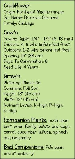 Cauliflower growing guide.  Fertilizing cauliflower. Watering cauliflower. Planting cauliflower.