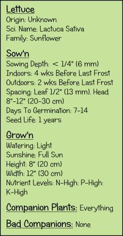 Lettuce, How to grow lettuce, home grown lettuce, lettuce in grow boxes, starting lettuce, Lettuce in your garden,